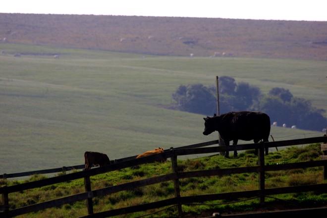 Esse recorte do estado paranaense tem produção agrícola e pecuária, tem emprego e renda que enchem os olhos e garantem o desenvolvimento econômico e social. | HENRY MILLEOGazeta do Povo