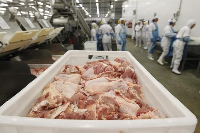 As granjas do município chegaram a acumular mais de 300 mil perus em situação de abate. | Jonathan Campos/Gazeta do Povo