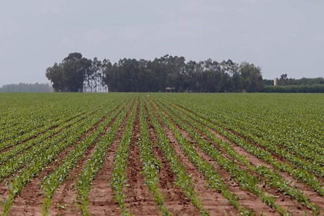 Plantio de soja na região de Formosa do Rio Preto, no MaToPiBa. Região é considerada a última fronteira agrícola do país. | Albari Rosa/Gazeta do Povo
