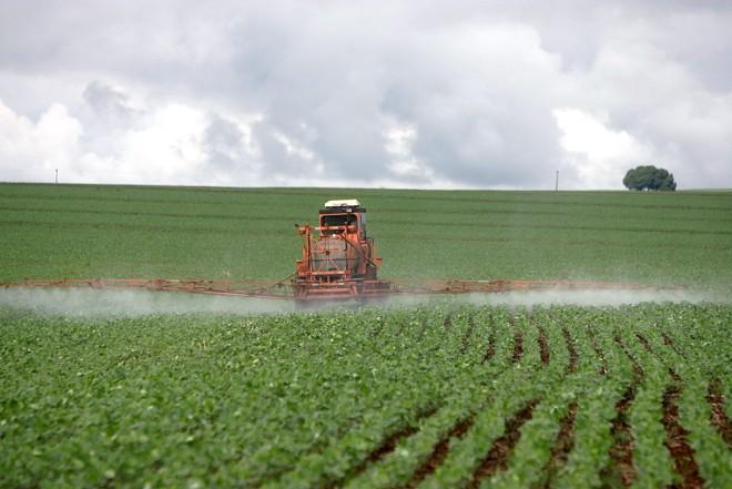 Óleo de nim:inseticida natural pode ser utilizado em larga escala na agricultura comercial ou em pequena margem na agricultura orgânica | HEDESON ALVES/GAZETA DO POVO