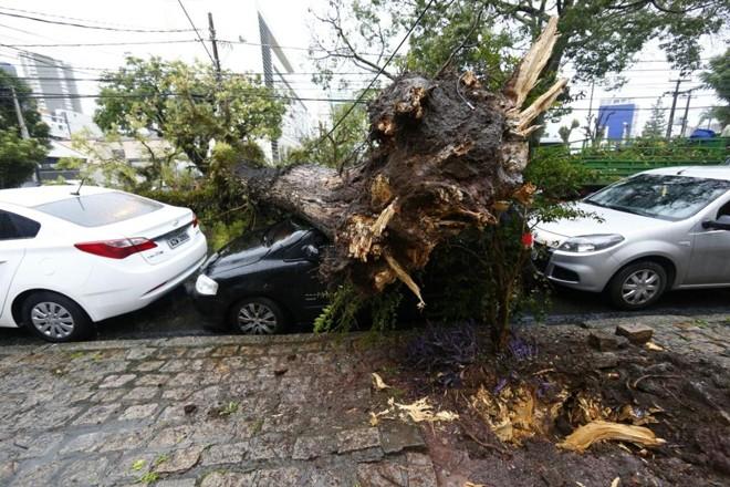 Árvore que caiu nesta terça na Avenida Iguaçu, em Curitiba | Aniele Nascimento/Gazeta do Povo