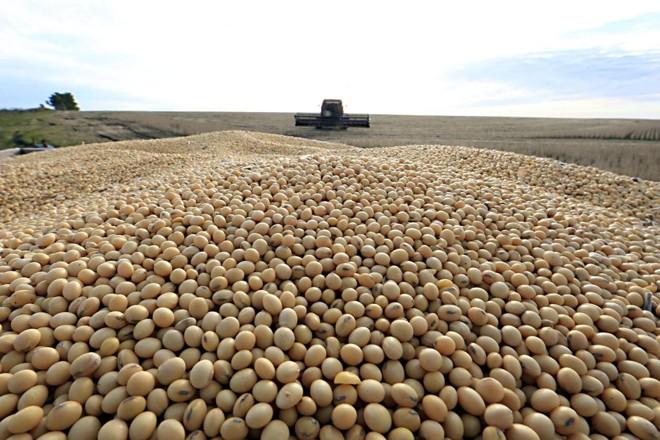 Supersafra se deve a condições climáticas favoráveis e ao aumento da produtividade média em todas as culturas, com destaque para o milho e a soja | Albari Rosa/Gazeta do Povo