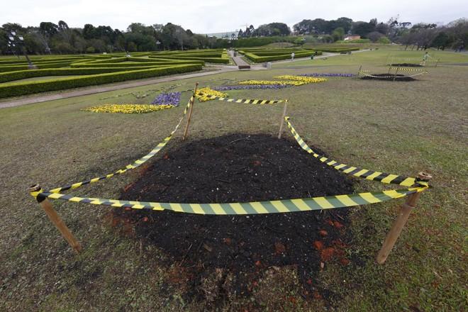 Buracos são berços para o plantio de araucárias. | Aniele Nascimento/Gazeta do Povo/