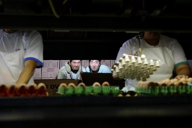 O avicultor Katsuhide Maki com o filho Christian Maki. Família está na quarta geração de trabalho com postura de ovos comerciais. | Felipe Rosa/Gazeta do Povo