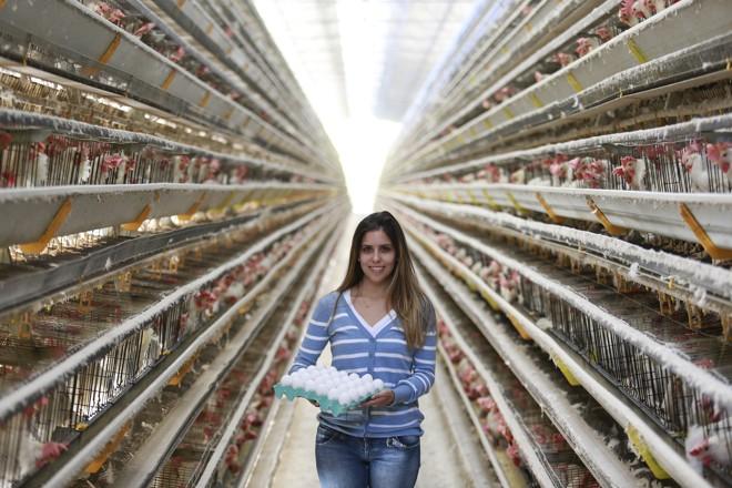 Alexandra Duarte ajuda o pai no comando da empresa. Depois de um 2016 turbulento, quando os preços do milho dispararam, o ano agora promete. | JONATHAN CAMPOS/GAZETA DO POVO