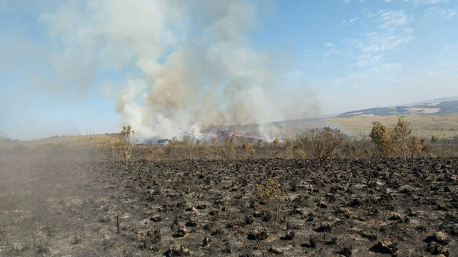 Pesquisadores do IAP planejavam realizar uma queima controlada no mesmo espaço atingido pelo incêndio   Divulgação/Instituto Ambiental do Paraná (IAP)