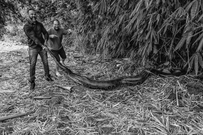 Sucuri às margens da BR163, no Mato Grosso | Jonathan Campos/Gazeta do Povo