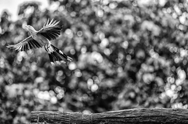 Pássaro em propriedade de Mato Grosso | Jonathan Campos/Gazeta do Povo