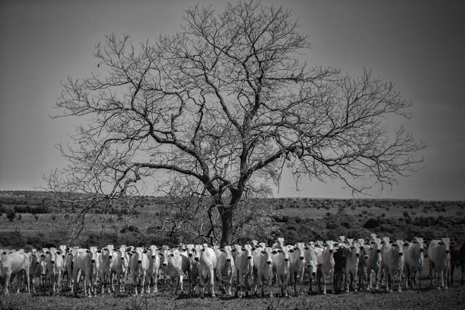 Bois encontrados em estrada rural do Mato Grosso do Sul | Jonathan Campos/Gazeta do Povo