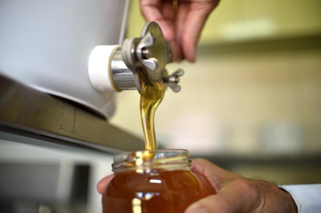 Com nova lei, potes do mel brasileiro podem ficar  altamente restritos ao mercado nacional | Andre Borges/Agência Brasília