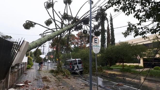Araucária caiu com os ventos na Rua Vicente Machado, no Batel. | Cecília Tümler/Gazeta do Povo