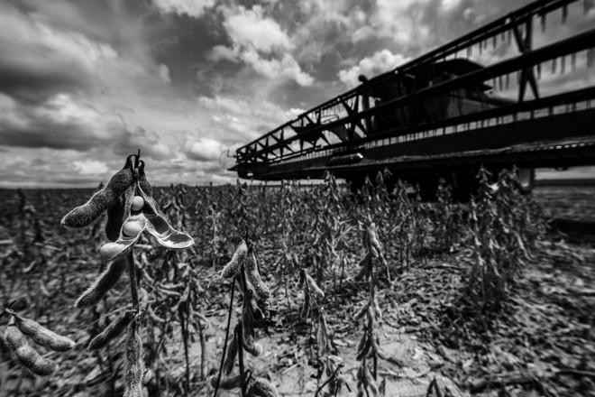 A Soja Louca 2 é uma doença que predomina em regiões quentes e chuvosas como os estados do Maranhão, Tocantins, Pará e Mato Grosso. | Lineu Filho/Gazeta do Povo