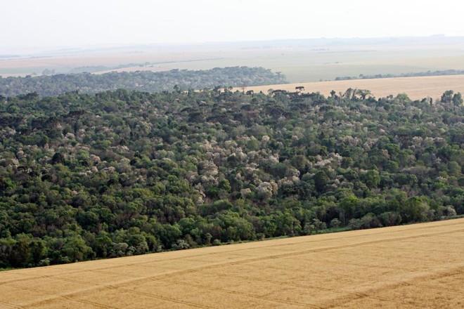 Vista panorâmica de lavoura e área de preservação em Campo Mourão, no Noroeste do Paraná | Albari Rosa/Gazeta do Povo