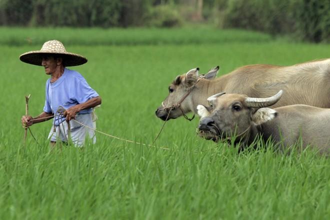 A segurança alimentar é um dos maiores desafios dos países populosos e de menor renda, principalmente na Ásia e na África.   Arquivo/Gazeta do Povo