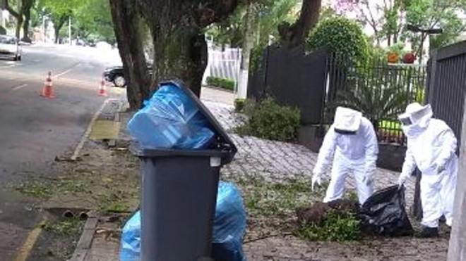 Corpo de Bombeiros foi acionado para retirar as abelhas do Condmínio Colina Dalenon, no Bigorrilho.   Colaboração Jackson Guelmann/