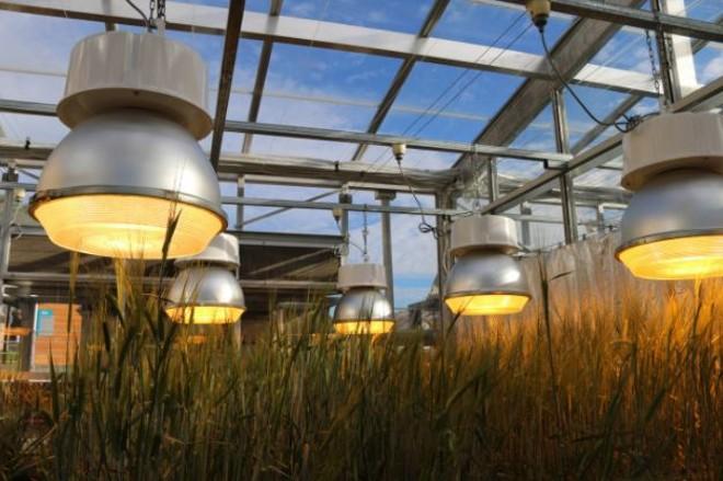 Mais baratas, lâmpadas de LED são também mais eficientes para ajudar na fotossíntese | Divulgação/Universidade de Queensland