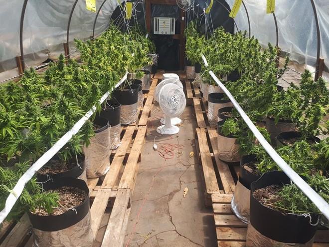 Estufa onde a plantação foi encontrada | 5 BPM/Divulgação Facebook
