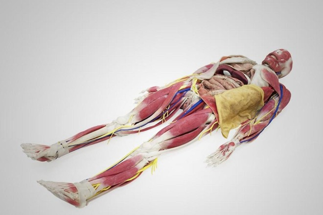 Cadáver sintético tem versões de R$ 200 mil a R$ 700 mil | Csanmek