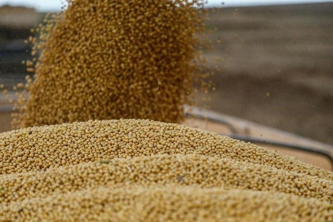 Atualmente, a colheita de soja no Paraná atingiu 27% da área semeada no estado, estimada em 5,5 milhões de hectares. | Jonathan Campos/Gazeta do Povo