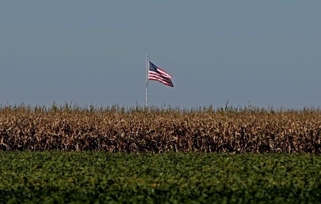 Com cada vez menos milho sendo plantado nos Estados Unidos, Brasil espera ocupar brecha no mercado internacional. | ALBARI ROSA/ALBARI ROSA