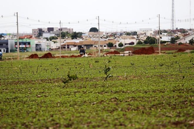 Plantio de soja ao lado da cidade de Nova Mutum (MT). | Felipe Rosa/Gazeta do ovo