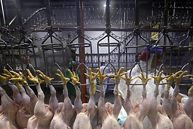 Por enquanto, a Comissão Europeia indica que as certificações exigidas depois da primeira fase da Operação Carne Fraca continuam em vigor. | Albari Rosa/Gazeta do Povo