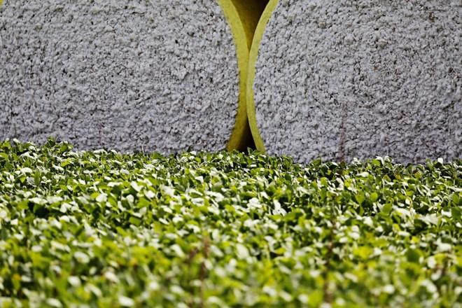 Algodão e soja:aumento da produção de algodão em pluma foi estimada em 1,9 milhão de toneladas - aumento de 21,3% | Felipe Rosa/Gazeta do Povo