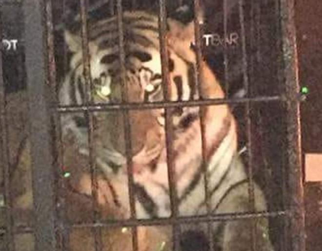 Além do tigre, uma jiboia também teria sido levada à balada em março. | Reprodução Facebook