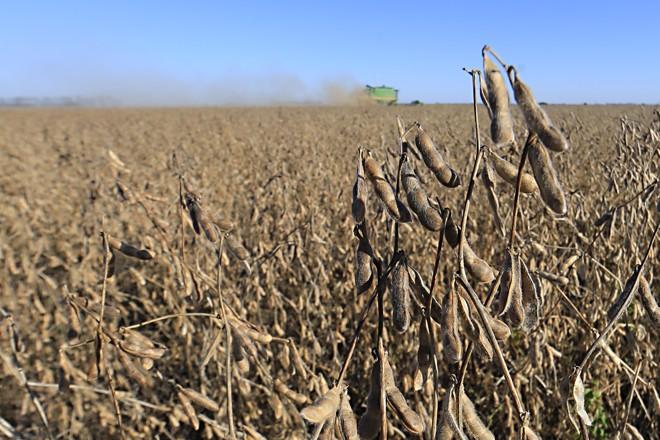 Segundo a entidade, 28% da área de soja está colhida, muito acima dos 8% de igual período do ano passado. | Albari Rosa/Gazeta do Povo