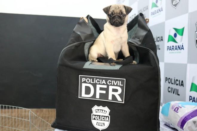 Cachorrinhos foram devolvidos aos donos pela Polícia Civil. | Polícia Civil/