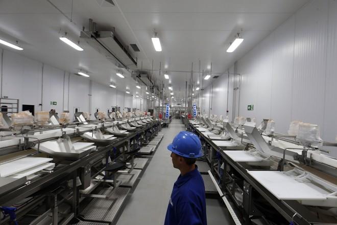 Abatedouro de peixes em Palotina é uma das plantas industriais das cooperativas paralisadas no Paraná | Albari Rosa/Gazeta do Povo