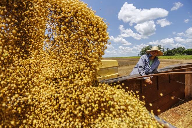 Exportações de soja do Brasil estão aumentando graças à  recente ameaça chinesa de aumentar as tarifas sobre  o produto vindo dos Estados Unidos em 25%. | Jonathan Campos/GAZETA DO POVO