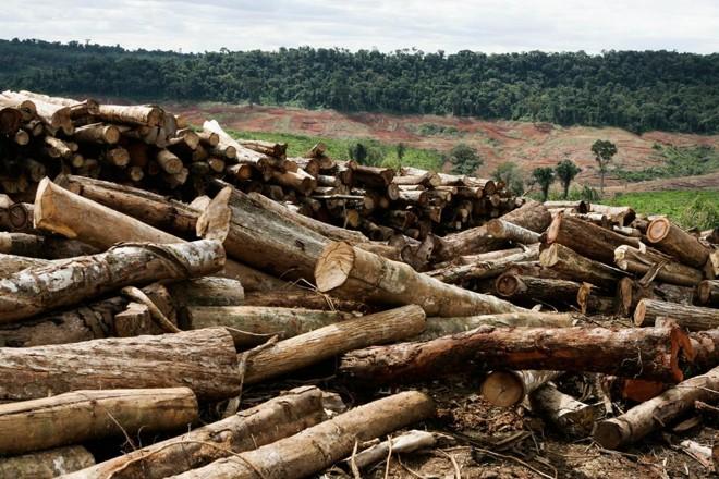 Paraná é recorrentemente um dos estados que mais derruba a Mata Atlântica. | Henry Milleo/ Arquivo Gazeta do Povo