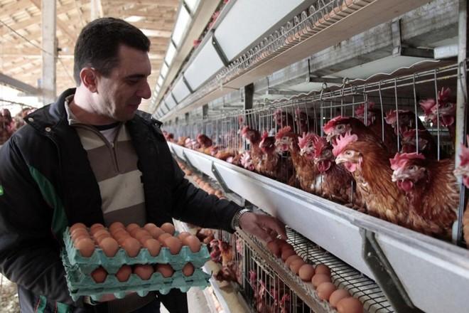 Joel Zulian quer dobrar o alojamento de aves e a produção nos próximos três anos. | Daniel Caron/Gazeta do Povo