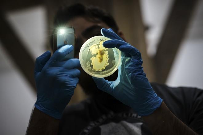 Examinando uma placa de Petri no Genspace, laboratório de biohacking em Nova York  