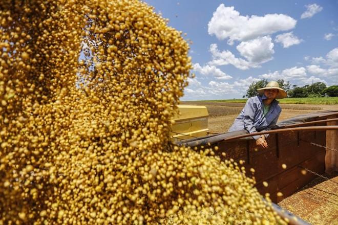 Embora a produção de soja tenha aumentado para os dois institutos, o tamanho total da safra brasileira caiu. | Jonathan Campos/GAZETA DO POVO