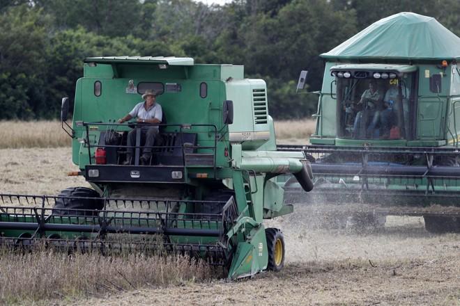 Nova forma de divulgação de relatórios do USDA será implementada em agosto | Daniel Caron/Gazeta do Povo