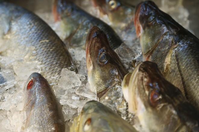 Carrefour e Walmart foram, ainda, proibidos de comercializar pescado enquanto a situação não for regularizada. | Henry Milleo/Gazeta do Povo