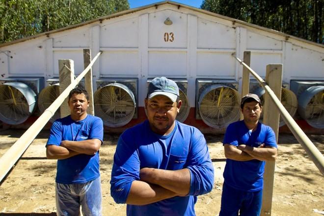 Último dia de trabalho de três funcionários de granja  no Sudoeste de Goiás: limpeza e fechamento | Daniel Caron/Gazeta do Povo