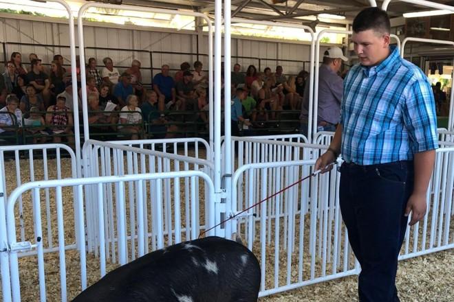 Waylon Klitzman, 15 anos, que arrecadou fundos para a pesquisa do câncer com o leilão de um porco | Kim Katzenmeyer/Divulgação