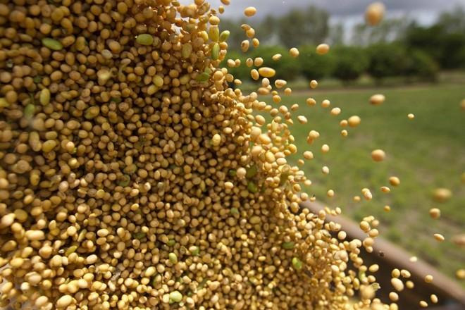 A produção de soja vai salta de 115 milhões de toneladas para 156 milhões de t. | JONATHAN CAMPOS/GAZETA DO POVO