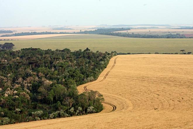 Brasil tem mais de 65% do território coberto de áreas verdes | Albari Rosa/Gazeta do Povo