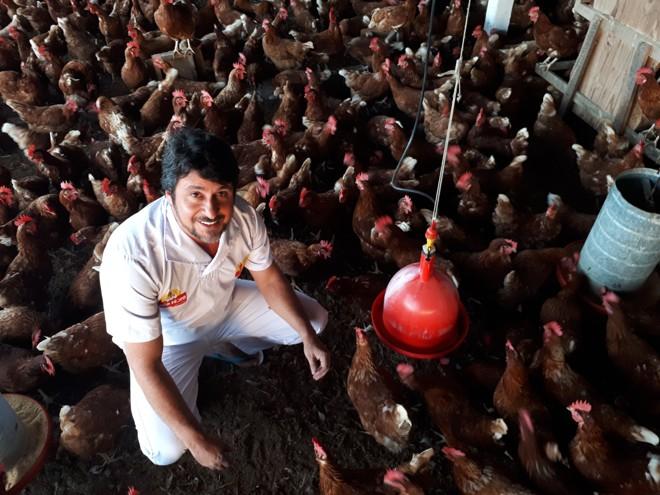 Rildo Ferraz em um galpão de galinhas poedeiras livres de gaiola em São Bento do Una, Pernambuco | Marcos Tosi/Gazeta do Povo