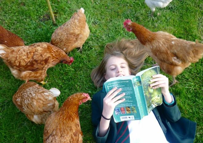Garota inglesa Sally Hilton cercada por galinhas adotadas | Divulgação/BHWT