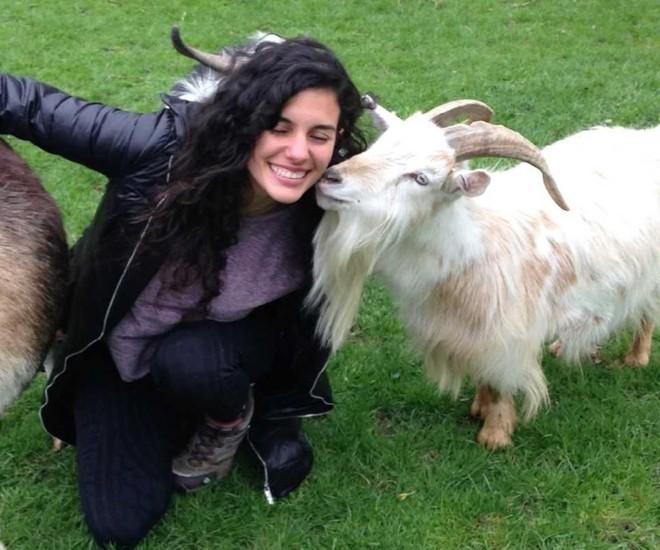 A pesquisadora Natalia Albuquerque diz que as cabras são sensíveis às expressões humanas e possuem habilidades psicológicas complexas | Alan McElligott/Divulgação