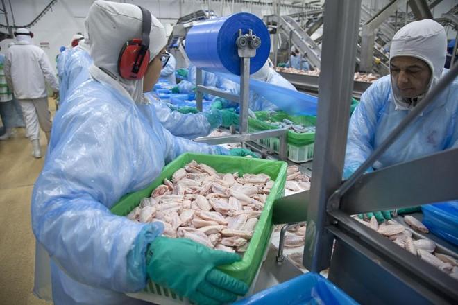 Volume de frango exportado em agosto está 59,8 mil toneladas acima da média de exportações registrada em 2018. | Daniel Caron/Gazeta do Povo