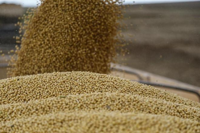 USDA ampliou projeção de colheita nos EUA para 127,73 milhões de toneladas (número que, se concretizado, garantiria a maior produção da história). | Jonathan Campos/Gazeta do Povo
