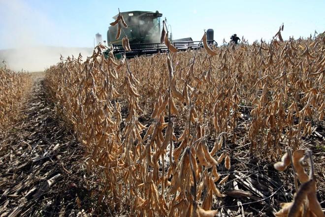 Colheita da soja começou neste mês, nos Estados Unidos   Arquivo/Gazeta do Povo