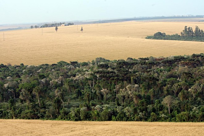 Pelo decreto, será considerada como regular a área de reserva legal igual ou existente em 22 de julho de 2008 para propriedades que naquela data não possuíam áreas de preservação permanente e remanescentes de vegetação nativa. | Albari Rosa/Gazeta do Povo