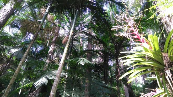 O açaí da palmeira Juçara tem uma polpa rica em antioxidantes que é usada em sucos e receitas culinárias | Vera Lucia Martins/Pexels/Reprodução